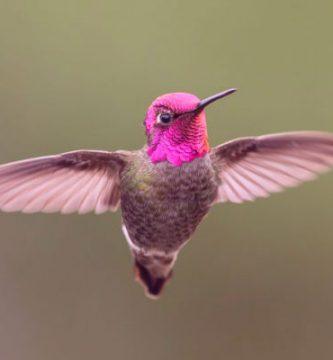 ciclo de vida de un colibrí (1)