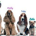 Todos los nombres de animales