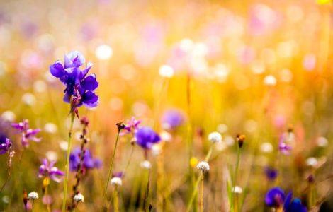 orquídeas durante todo el año